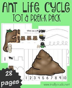 Your little ones will have fun learning about the Ant Life Cycle with this ADORABLE Tot & PreK-K pack full of activities!! :: www.inallyoudo.net