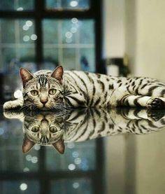 ¿Cuál es el gato y cual su reflejo?......