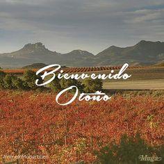 #bienvenidootoño2015 #autumn  #adiosverano #otoño2015 #wellcomeautumn #estación #BodegasMuga #muga #paisajes #ocres #viñedo #Enoturismo #naturaleza #wine #vino #winegeeks #wineonmytime #wineoclock