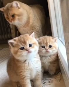 Adorable Family! Cute Baby Cats, Funny Cute Cats, Cute Little Animals, Cute Cats And Kittens, Cute Funny Animals, Kittens Cutest, Cute Dogs, Cute Animal Memes, Cute Animal Videos