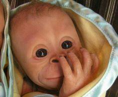 Bindi The Baby  Chimp