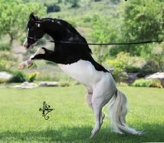 ROKO Lotto Splash Of Perfection--  #horses