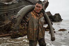 Production of mammoth tusk in Siberia   English Russia