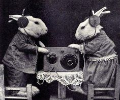 2 bunnies in clothes listening to the radio with head phones - black and white photo