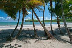 La Sagesse Caribbean Beach Escape - Tropical Caribbean Beach Hotel in Grenada. Grenada Caribbean, Southern Caribbean, Underwater Sculpture, Tropical Beaches, Nature Center, White Sand Beach, Beach Hotels, Beach Photography, Beach Fun