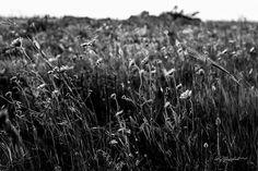 E a guardarli bene ad odorarli i fiori conservano nella loro brevissima giornata terrena una traccia vaga indefinibile di un mondo che essendo misterioso apre il cuore dell'uomo alla speranza; ma soprattutto all'amore che è insieme verità e bellezza della vita. Ed è così che i fiori c'insegnano a sorridere.  Marino Piazzolla  #giovedifotografico