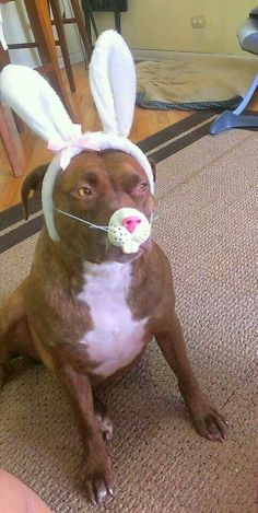Poor Pitty wabbit  ♥