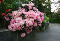Gallery of trees, plants & flowers in high-quality pictures.