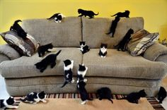 This will be my sofa