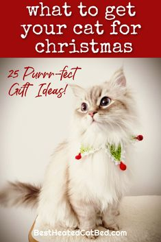 It's hard to believe, but the holiday shopping season is here. As you pick out presents for family and friends, remember to include your favorite feline on your gift-giving list. If you are stumped for what to get your kitty this year, we can help! We have rounded up the best Christmas gifts for cats so you can spoil your kitten this holiday season. Heated Cat House, Heated Outdoor Cat House, Heated Cat Bed, Christmas Ties, Great Christmas Gifts, Christmas Sweaters, Holiday, Heating Pads, Cute Stockings