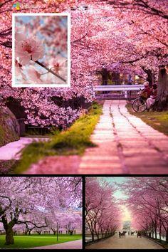 Sakura.  #bucketlist #japan2014 #april2014