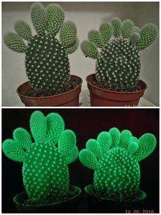 Cactus - #glowinthedark