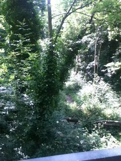 View from outdoor nutrition clinic at Sydenham Hill Woods