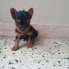 Meet Hershey! He loves treats.