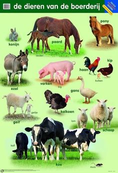 Farm Animals, Animals And Pets, Dutch Language, Teacup Pigs, Show Cattle, Showing Livestock, Mini Pigs, Educational Games For Kids, Preschool At Home