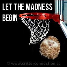 #marchmadness #ncaa #hedgehogs