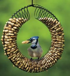 Make A Bird Feeder From An Old Children's Toy- I was just throwing out the slinky's---- A coat hanger, peanuts ( a huge argument with Bruce over salt killing birds) and were in business ..........
