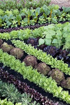 Companion planting just may help your garden grow. #OrganicGardening