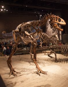 The Natural History Museum of Utah is one of the best places to see a Tyrannosaurus Rex.