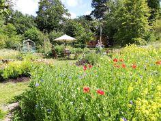 community gardening in Farnham, Surrey - Pumpkin Beth Edible Plants, Edible Garden, Meadow Flowers, Red Flowers, Farnham Surrey, Planting, Gardening, Growing Plants, Permaculture