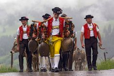 Traditional Dresses, Cowbells and #Cattle Drive in Switzerland – Alpauffahrt, Photo by Hans Zürcher, Teufen, Switzerland Drive In, Swiss Switzerland, Swiss Travel, Costumes Around The World, World Thinking Day, Demonology, Day Camp, Swiss Alps, Lausanne
