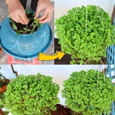 Container Gardening Vegetables, Planting Vegetables, Growing Vegetables, House Plants Decor, Plant Decor, Home Vegetable Garden, Vegtable Garden Design, Vertical Vegetable Gardens, Growing Mint