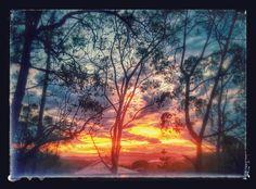 Mudgeeraba sunset