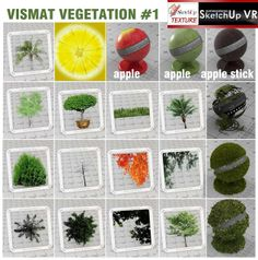 SKETCHUP TEXTURE: V-RAY FOR SKETCHUP VISMAT VEGETATION #1