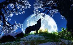 Beautiful night time wolf.
