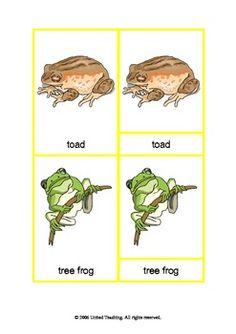 Montessori Three Part Cards - Amphibians