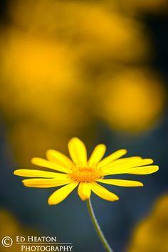 Yellow and Yellow