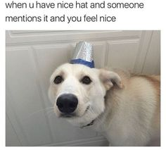 50 Today's Most Funny Memes (#260) #funnydogs