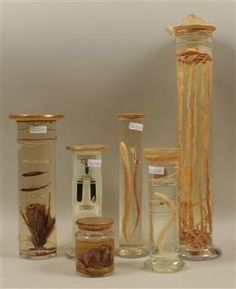 Six c. 1910 fluid-preserved Specimen Jars  http://steampunkincornwall.blogspot.co.uk/