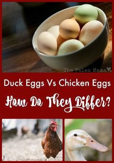 Duck Eggs Vs Chicken Eggs - what's the difference? We love both, and are often asked what the difference is between the two. http://thepaleomama.com/2016/06/duck-eggs-vs-chicken-eggs/
