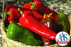 'Carmen' pepper #AAS winner #recipe. #gardening