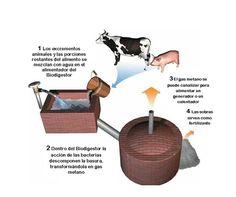 Los biodigestores fueron considerados, principalmente, como una manera de producir gas combustible a partir de desechos orgánicos. Sin embargo, al ser integrad