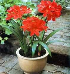 Natural Outdoor Plant Garden For Dogs And Cats