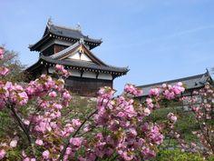 252:「お城まつりが過ぎた後、静かになった城跡に咲く八重桜です。」@郡山城址公園
