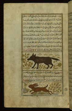 A hyena and a lynx  Wonders of Creation  by Qazwīnī 1293 was translated to Turkish in 1717  completed by Rūzmah-ʾi Nāthānī - W659