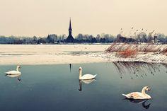 ©opiraituri shi pozăreli: Reflexii. Reflecții
