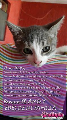 A mi #gato  ¡Te amo y eres mi familia! www.adopta.mx