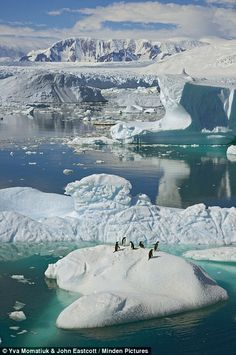 Hitching a ride: Adélie penguins on an iceberg surrounded by masses of floating ice, in western Antarctica ~ The Adélie Penguin is a species of penguin common along the entire Antarctic coast. They are among the most southerly distributed of all seabirds