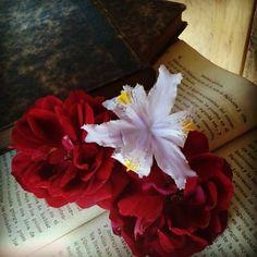 rosas,de mi jardín.