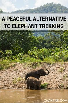 Should you ride elephants in Thailand? My say: Don't do it. Here's a peaceful alternative instead.