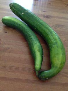 Cucumber ###xl###s