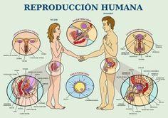 Aparells reproductors i les seves parts.