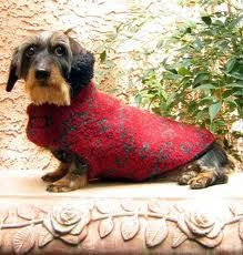Believe it or not, this is a dachshund.