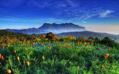 Célébrez le retour du printemps en admirant la beauté de ces magnifiques paysages fleuris .