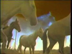 ▶ Horses on the Highway - YouTube