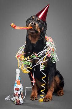 Prime Good Dog Carl W Cake For The Love Of Rotties Good Birthday Cards Printable Opercafe Filternl
